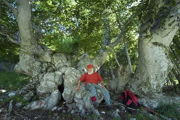 Pasetta siede su un albero antico mentre sosta durante un'escursione partita dal camping la genziana